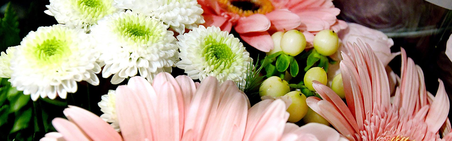 Blumen von EDEKA Motz
